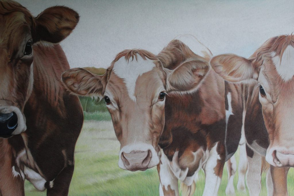 3 Cows standing in a field - colour pencil on paper