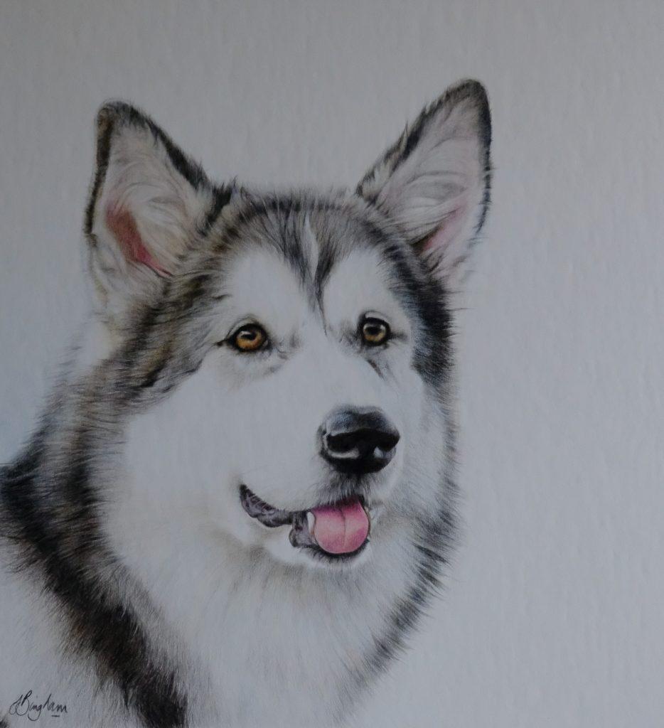 Illustrated portrait of Teyha, an Alaskan Malamute